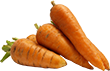 carrot_PNG4978